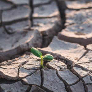climate change, greenhouse gasses, carbon reduction, carbon